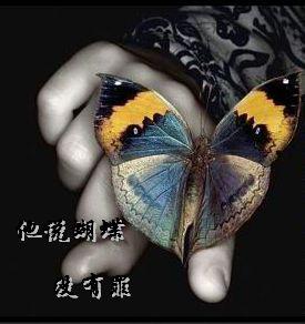 他说蝴蝶没有罪